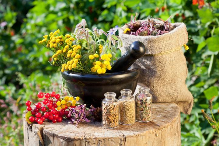 Heilpflanzen, Behandlung dr. Kappl